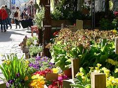 Frühling in Ottensen
