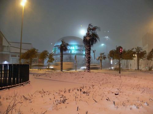 Bild der Woche: Hamburger Palmen im Schneestrum