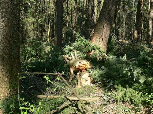 Wald in Hamburg – Bild der Woche