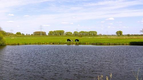 Altländer Angler – Bild der Woche