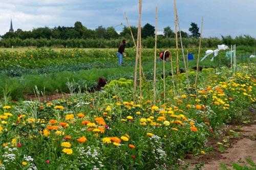 Gemüsegärten zum Mieten in Hamburg