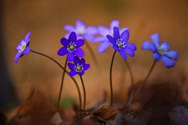 Leberbluemchen Foto von Udo-Steinhaeuser