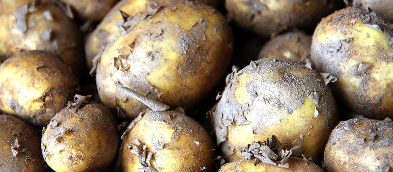 Herbstfest und Erntedank: Alsterdorfer Kartoffelschmaus