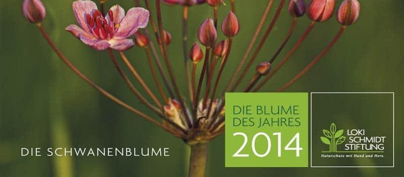 Klasse Geschenk: Der neue Kalender 2014 der Loki Schmidt Stiftung