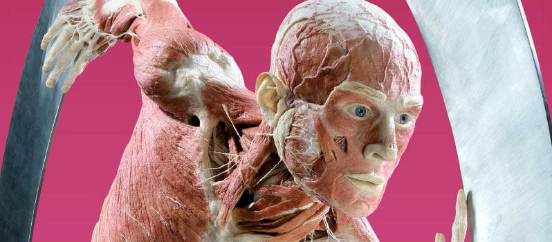 Kranke Toten-Ausstellung: Körperwelten in Hamburg