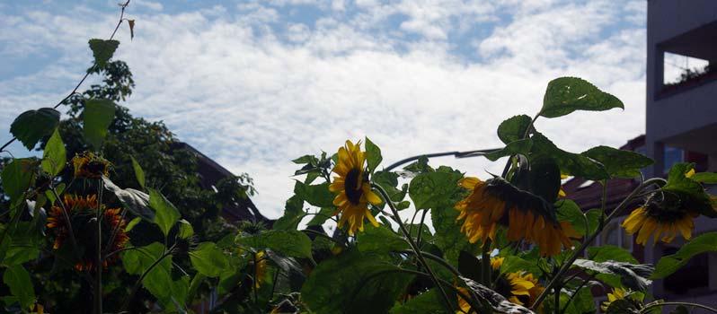 Urban Gardening oder Wildblumen im Balkonkasten