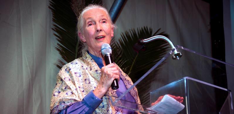Ein Fest für Jane Goodall – Gala in der Kulturkirche Hamburg-Altona