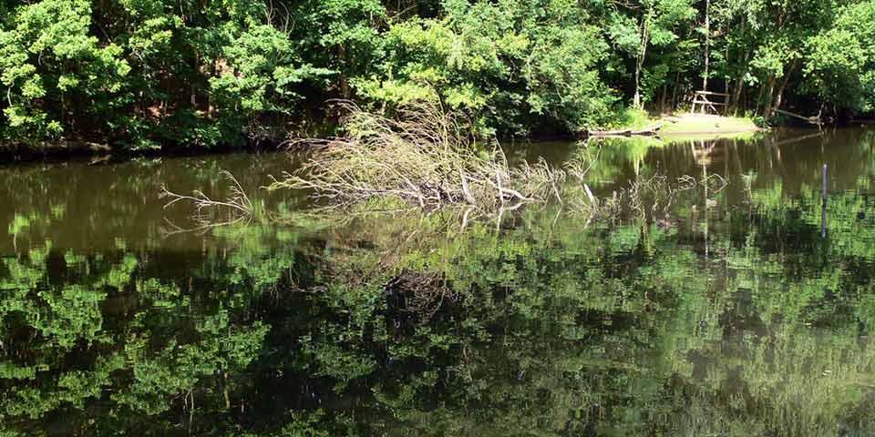 Naturschutzgebiet Eppendorfer Moor wird ausgeweitet
