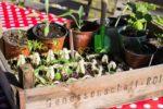 Startklar für den Gemüsegarten
