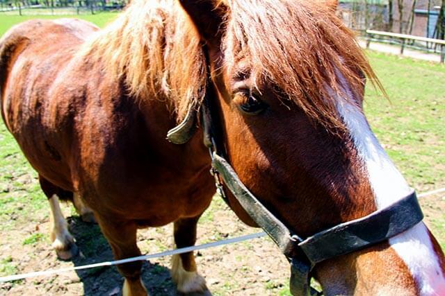 Pferdetag am Kiekeberg