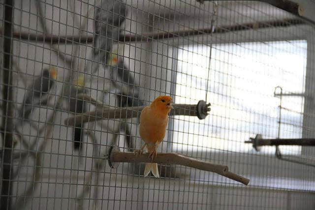 Haustiere in Hamburg: Hunde oder Vögel?