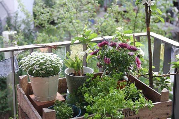 Bachblüten für Balkonpflanzen