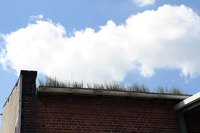 Ein Dachfenster ins Gründach einbauen gegen das Insektensterben?