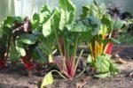 Was bedeutet der Hitzesommer für unsere Ernte