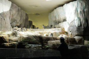 Hamburgs coolste Ferienaktion im Eismeer bei Hagenbeck