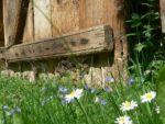 Wildblumen im Wendland